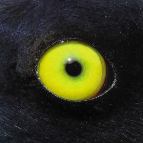 BAGO_eye_adult_male_TimBowman-500x500.jpg