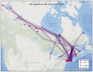 WWSC_Fall migration_F15_M23
